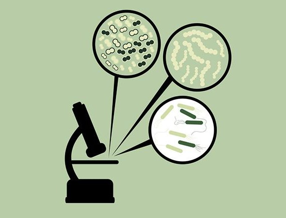 THE INVISIBLE: The Wonderful world of Bacteria