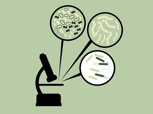 Kefir and Bacteria